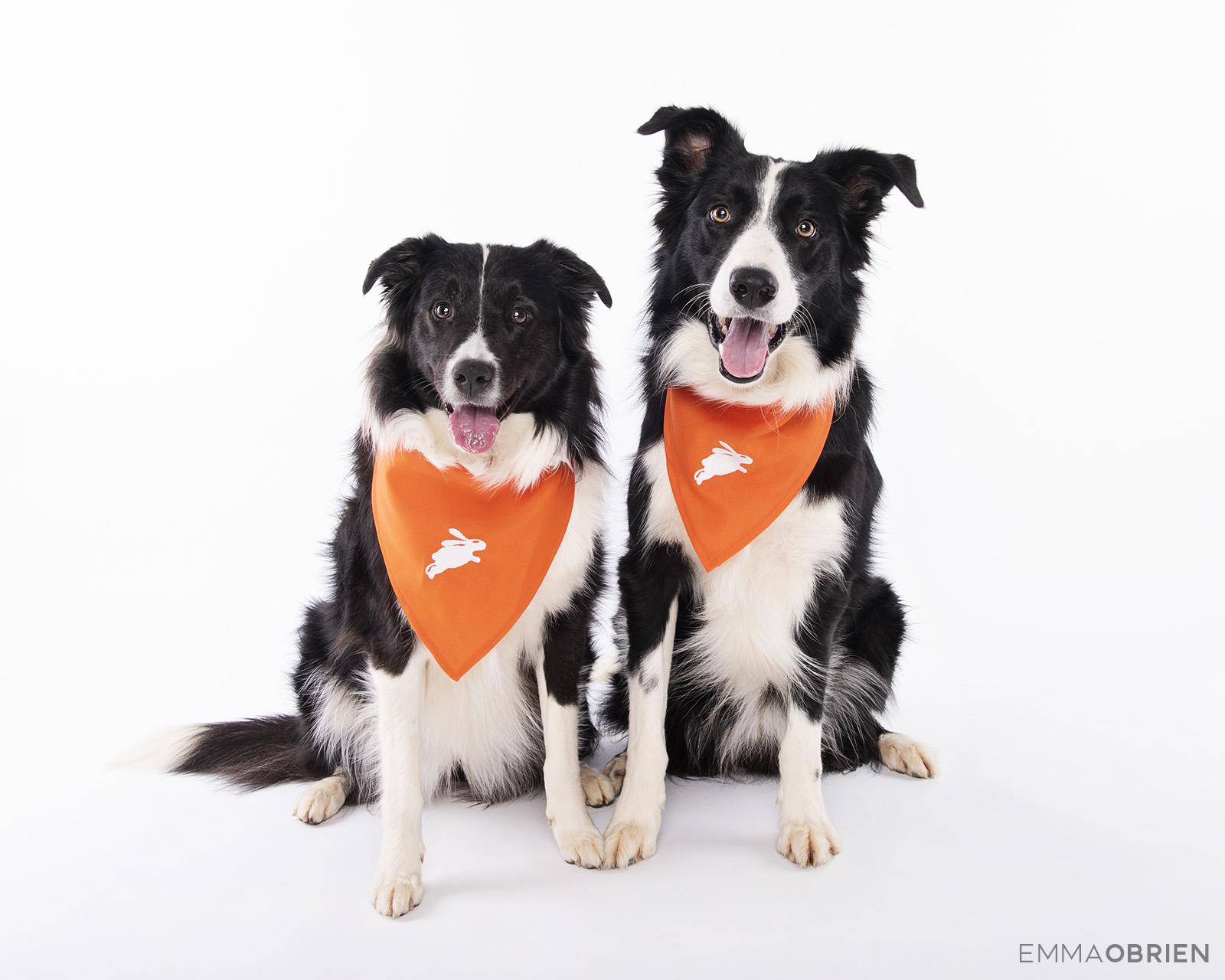 Dotsure Pet Insurance – Commercial Pet Photography   Photography ...