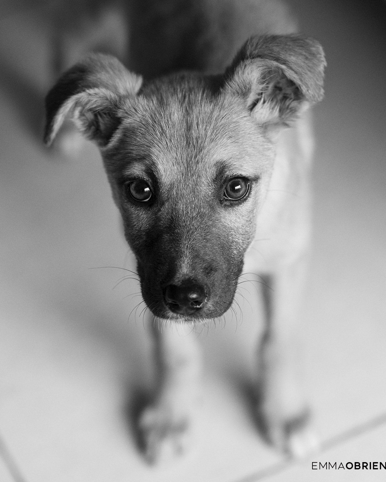 black and white photo of a small puppy