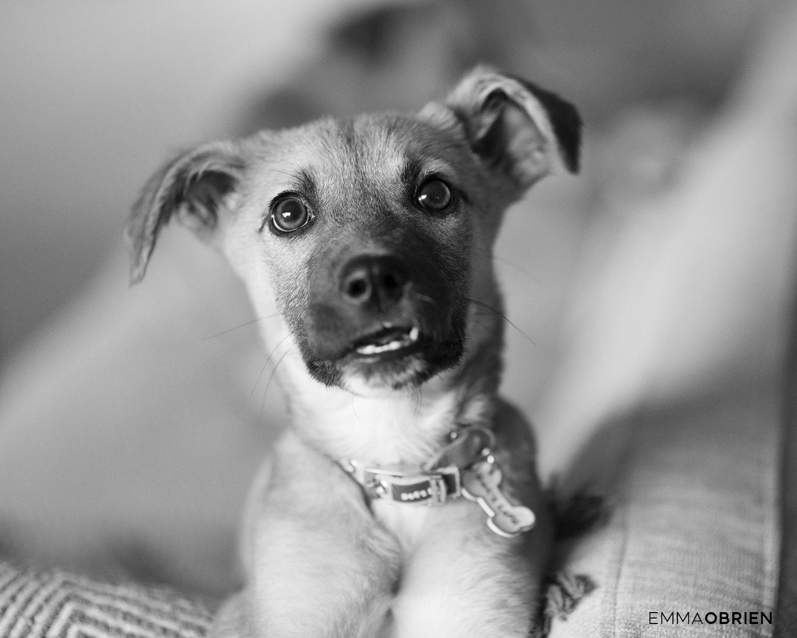 cute puppy portrait showing teeth